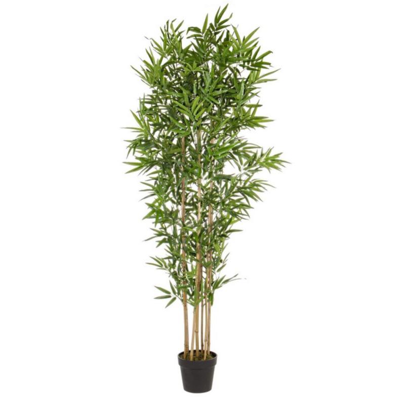 PLANTE BAMBOU AC-POT H185CM