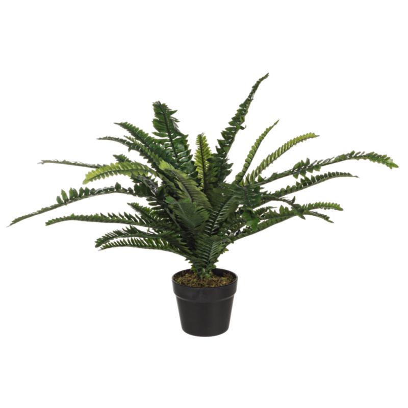 FERN PLANT 30LEAVES H60CM W-VASE