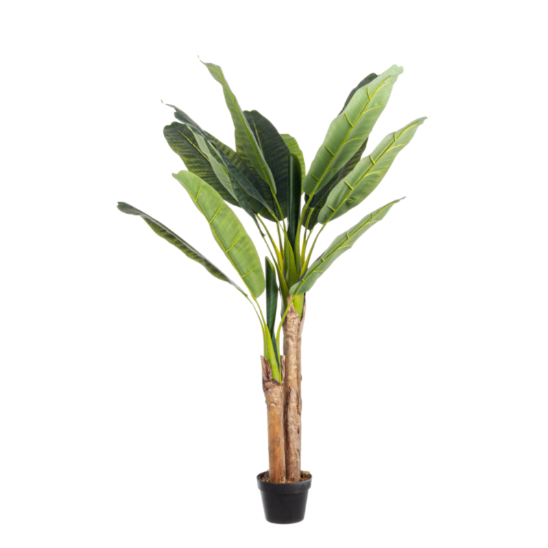 BANANO PLANT 14LEAVES H135CM W-VASE