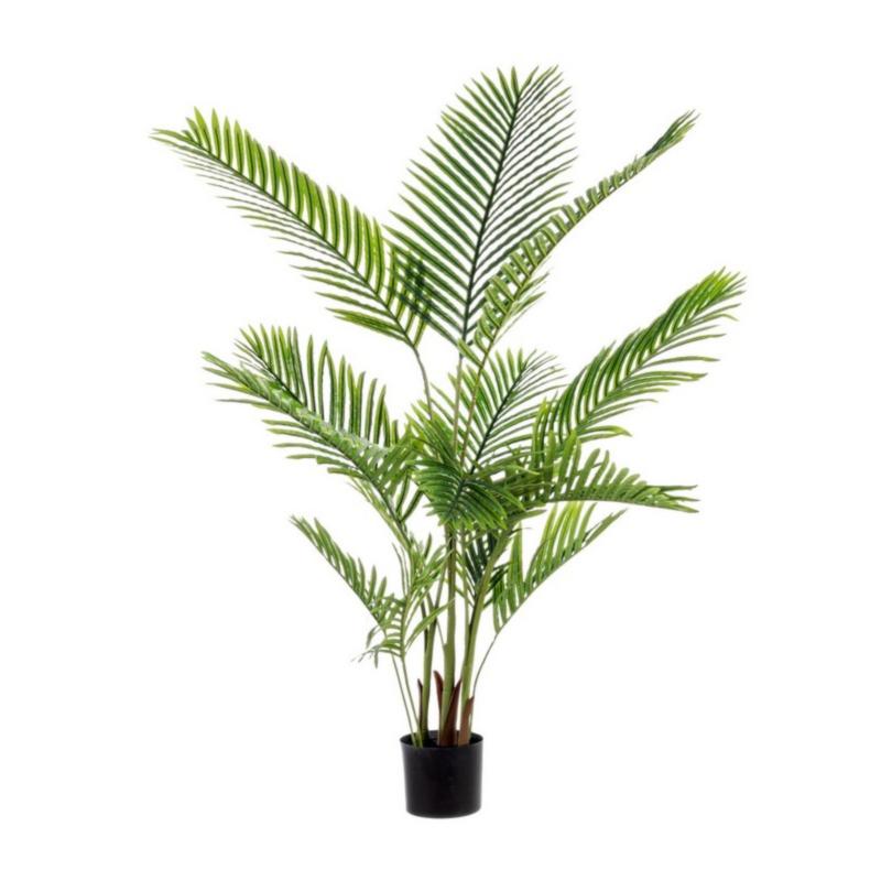 PLANTA KENZIA C-MAC 15HOJ H140