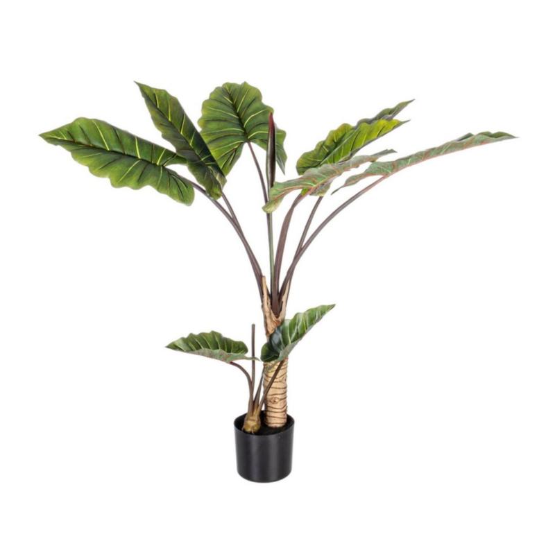 PLANTE DIEFFENBACHIA AC-POT 10F H134