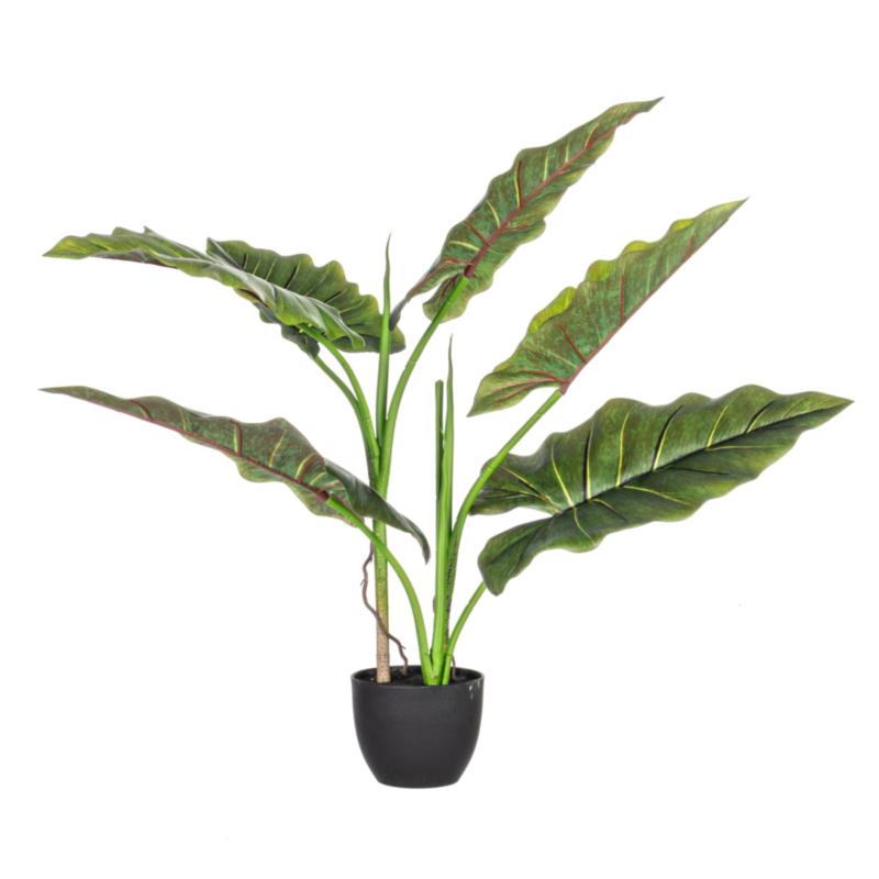 DIEFFENBACHIA PLANT 7LEAVES H78 W-VASE