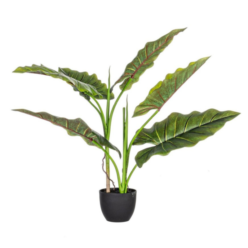 PLANTE DIEFFENBACHIA AC-POT 7F H78