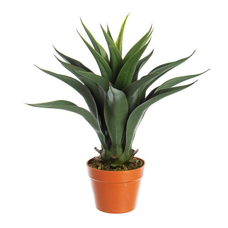 AGAVE PLANT W-VASE 25LEAVES H60