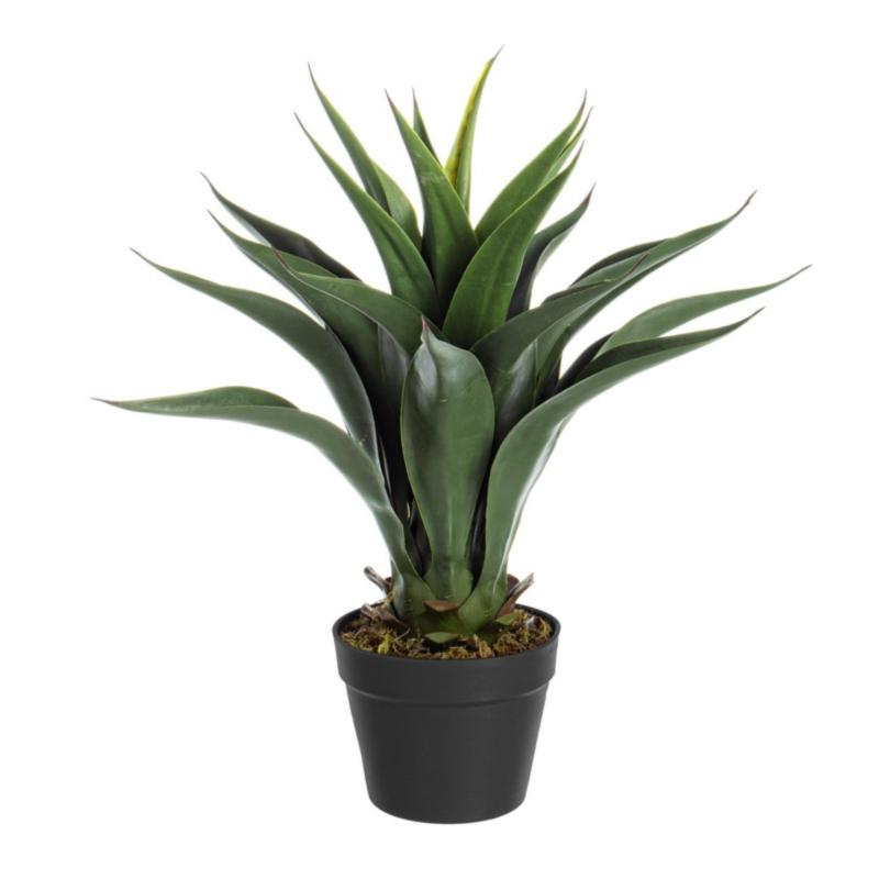 PLANTE AGAVE AVEC-POT 25FEUILLES H60