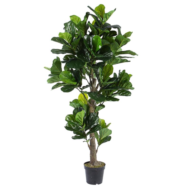 FICUS LYRATA PLANT W-VASE 153LEAVES H190