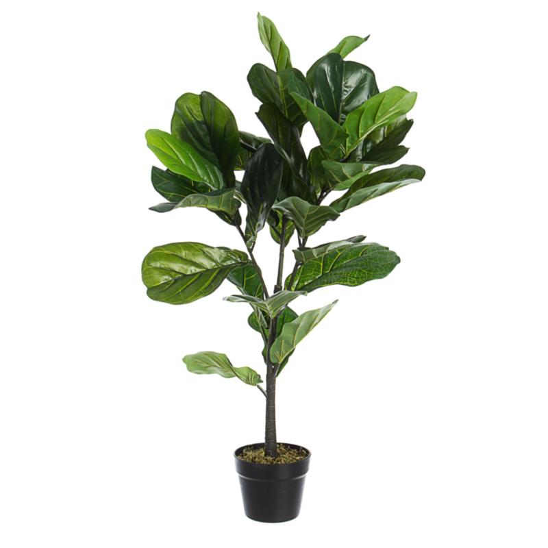FICUS LYRATA PLANT W-VASE 32LEAVES H100