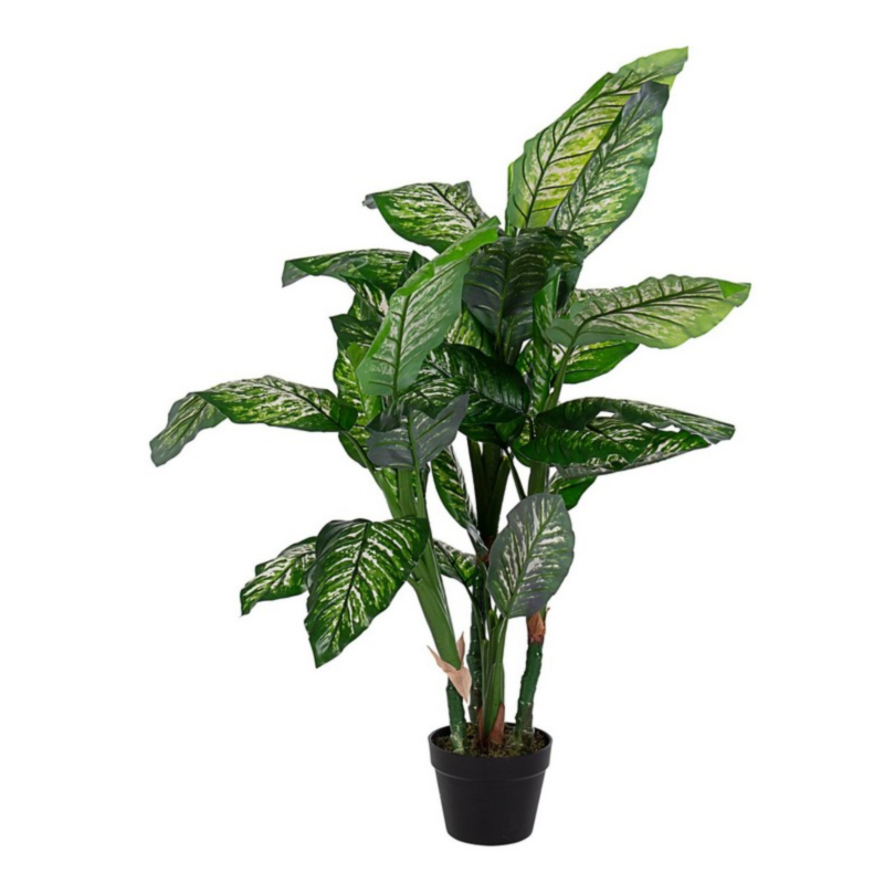 DIEFFENBACHIA PLANT W-VASE 31LEAVES H120