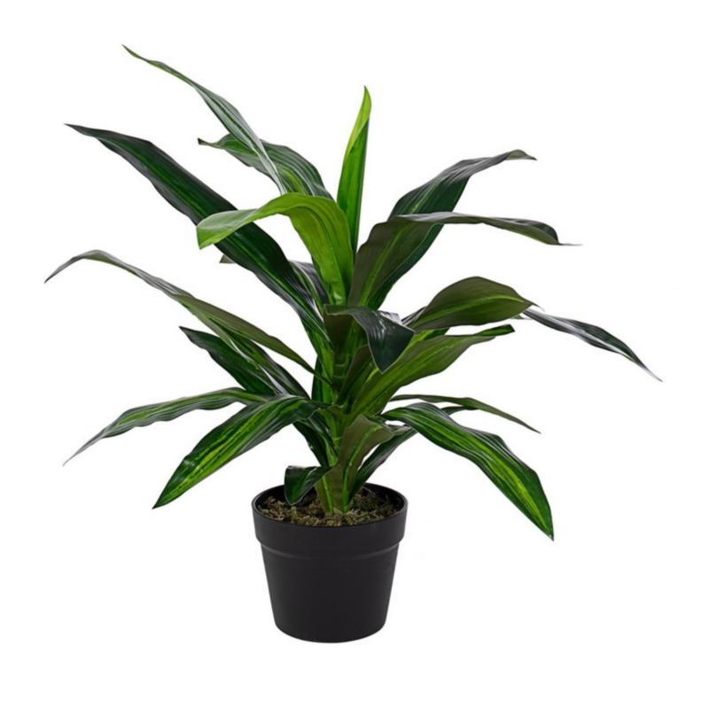 DRACANEA PLANT W-VASE 24LEAVES H65